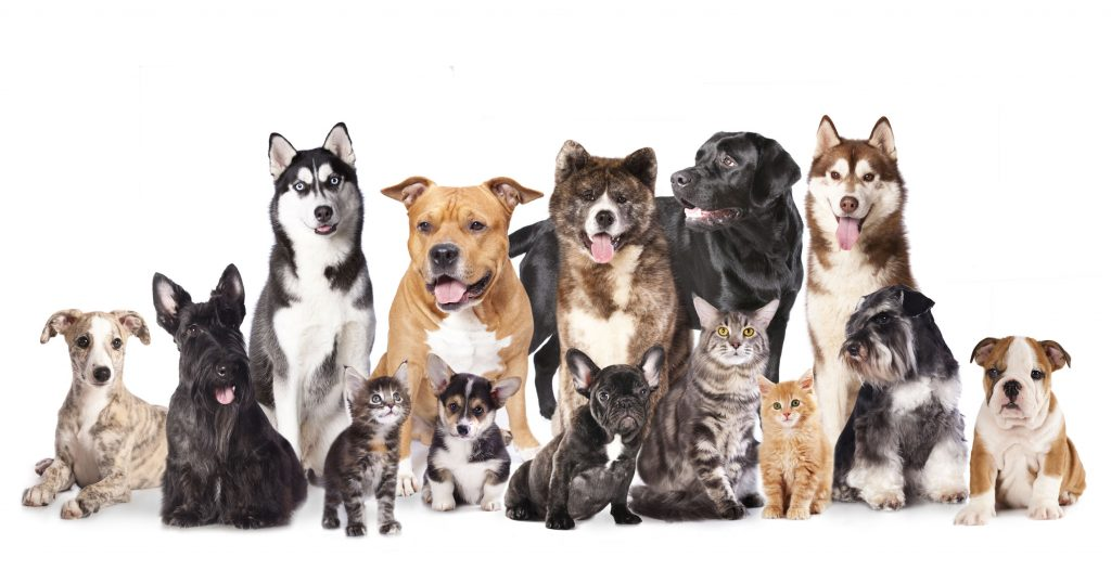 Find a dog or cat with perfect pet finder