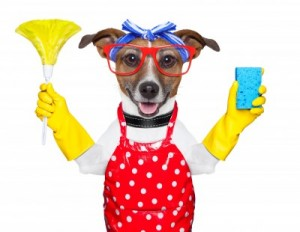 Pet Maid Cleaning Services