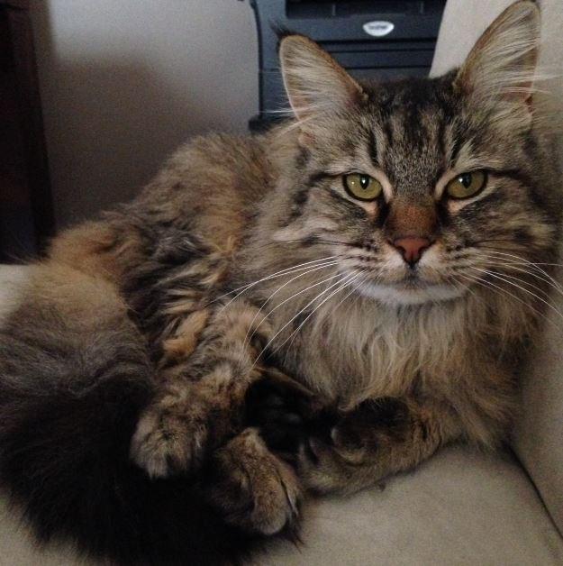 Washington Cat Adoption