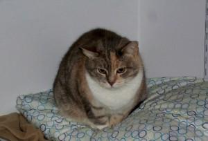 Lala - cat to adopt in Washington, VA