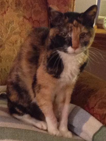 Bessie Cat