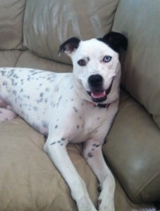 Pointer Mix For Adoption in NY