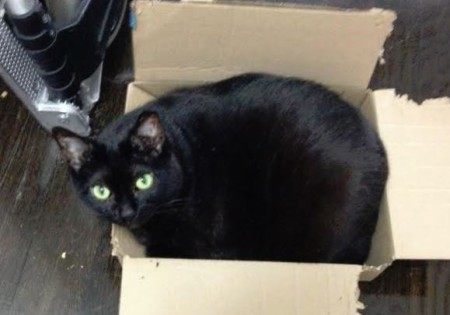 Got boxes? Selma will be your best friend! She LOVES boxes, almost as much as she adores paper!