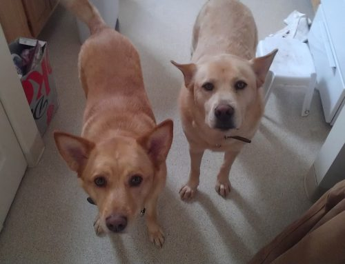 Johnny & Katie – Dogs For Adoption in Great Lakes, Illinois