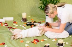 http://petprosservices.com/wp-content/uploads/dog-massage-300x198.jpg
