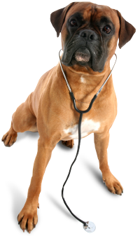 pet home health care