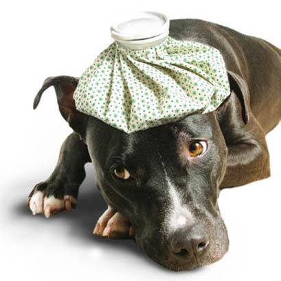 Pet Pros Pet Home Health Care Services